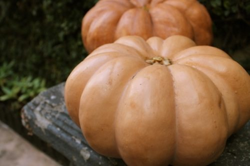 pumpkins and weight loss